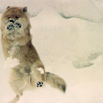 begeisterter Skifahrer: Liftloipen, Pisten, Langlauf