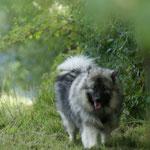 Als Wolf such ich mal Rotkäppchen