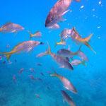 ..mit soo vielen verschiedenen Fischen