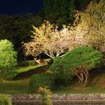 IBD(メンサ国際会議)in 京都。会場に鹿さんが現れた!!!来日された世界中のメンサ会員を歓迎してくれてるかのよう。有難う、シカさん。