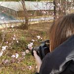 Mireya. Sacando una flor en primer plano con poca profundidad de campo. Curso Básicio de Fotografía.  Foto: Andreu Gual