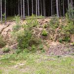 Typischer Lebensraum (sonnig, vegetationsarm, reich strukturiert), Gutau, Mai 2013