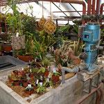 das bepflanzte Wasserbeet