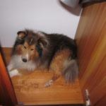 Schrankhund ;)