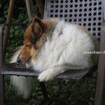 A.J.´s Schlafpostion im Garten
