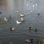 Urlaub in Zoutelande - Vlissingen und Middelburg