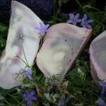 Lavendel-Joghurtseife 10.06.14