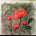 Mohnblumen 4, Aquarell auf Papier, 24 x 24 cm
