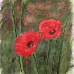 Mohnblumen 3, Aquarell auf Papier, 24 x 24 cm