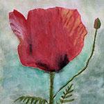 Mohnblumen 6, 2019, Aquarell auf Papier, 29,7 x 21 cm