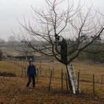 Nabu-Mitglieder beim Obstbaumschnitt