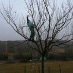 Voller Einsatz - Nabu-Mitglied beim Obstbaumschnitt