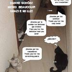 Die Katzen vom «Casa Solidaria» bedanken sich