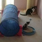 die kleinen Kitten haben freude an den neuen Spielsachen