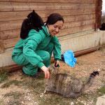 viele der Katzen sind sehr menschenbezogen