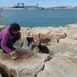 Rosana wird schon sehnsüchtig von den Hafenkatzen erwartet.