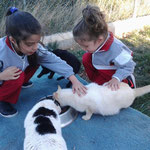 Nayla und Ylenia kümmern sich um die Katzen