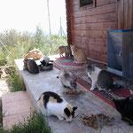 Die Katzen von Calig
