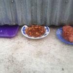 das Futter wird unten durch geschoben, die Katzen leben in einem Abruchhaus