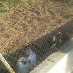 die Katzis warten jeden morgen am Zaun auf ihr Futter