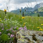 Alp Grube Boltigen Jaunpass