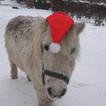 Deli als Weihnachtswichtel