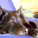 Ronja - Im Hundehimmel