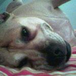 Gina - Im Hundehimmel