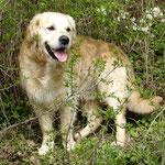 Aramis - Im Hundehimmel