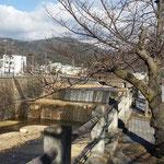 Ashiya river in front of Ashiya Shimin Center