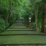 白山比咩神社参道の新緑
