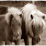 Coolstep Renesmee & Romanze vom Purnitzgrund 27.09.14