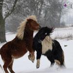 Romanze & Elvy