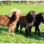 Die Fohlenbande: Renesmee, Delilah & Greg