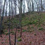 Links eien Abbauhalde des darüberliegenden Steinbruchs, rechts durch Frostverwitterung entstandene Blockhalde. Foto E. Klein