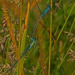 tief versteckt im bunten Gras fand diese Paarung statt
