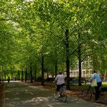 Blick in die Promenade, ein Grüngürtel rund um die Innenstadt