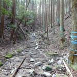倒木や大きな落石に気をつけながら、山道を進みます。