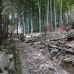 竹林の奥に鉄線がはりめぐらしてあります