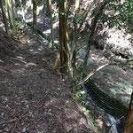 大谷林道に合流。林道を下って駅まで帰ります。
