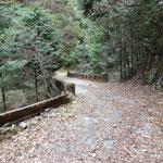 平子谷林道第貮號橋を渡って左岸へ
