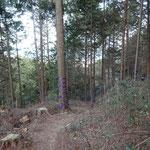 斜面を下ります。木々の間から琵琶湖が見えます。