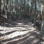 木漏れ日の山道を登ります。
