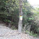 コールポイント「比叡6」で、平子谷林道支線に合流しました