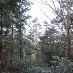 壺笠山城の周辺を巡ると木々の間から少し眺望が。