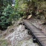 向かいの木の坂を上ると桜茶屋への自然歩道の続きですが・・・