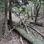 倒木も多く、道の体をなしていない