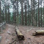 一気に登って、稜線の道に合流。右は壺笠山へ続く道