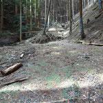 小さな広場に達して、林道は終点です。