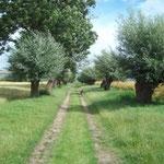 der 200m lange Weg zur Kirchsee mit eigener Liegewiese